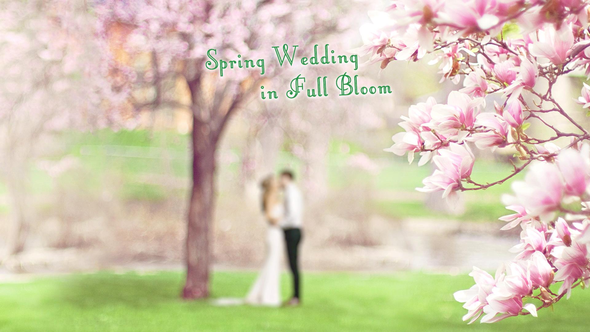 桜が満開でのブライダルシーン 2018年春のフォトスタジオISホームページトップ画像